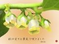 17-05柿の花