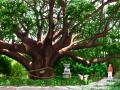 日本三大樹天然記念物 樟の森 山口県