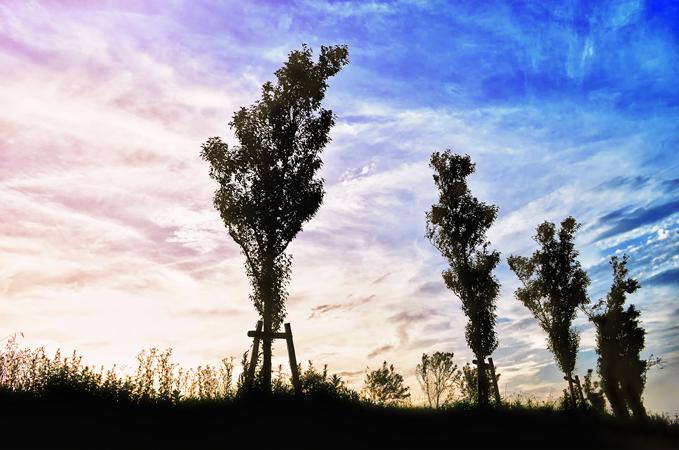 狭山池:夕暮れ 2012-07-25