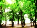 大仙公園:木漏れ日のベンチ 2012-07-25