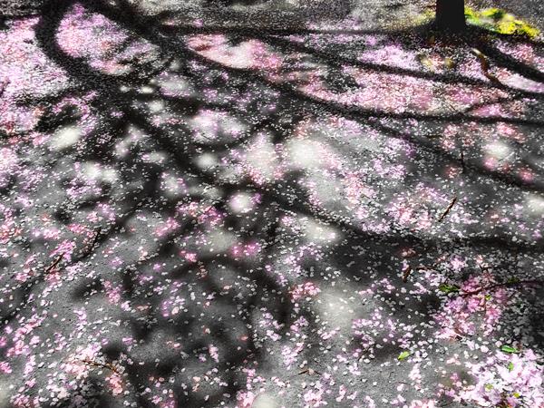 箕面市 2012-04-18 撮影:take1mgさん