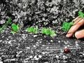 狭山池:てんとう虫 2012-04-21
