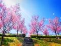 狭山池 2012-04-09